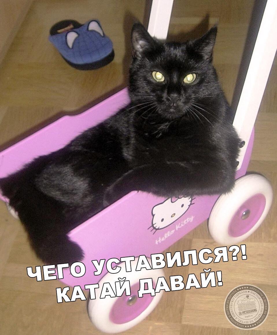 Катай давай