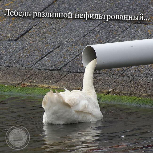 Лебедь разливной нефильтрованный