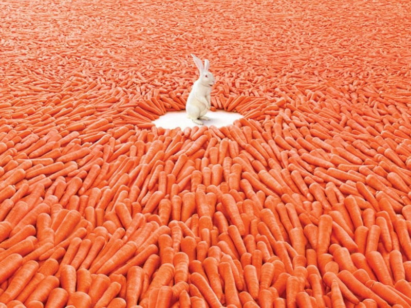 Морковь - мечта